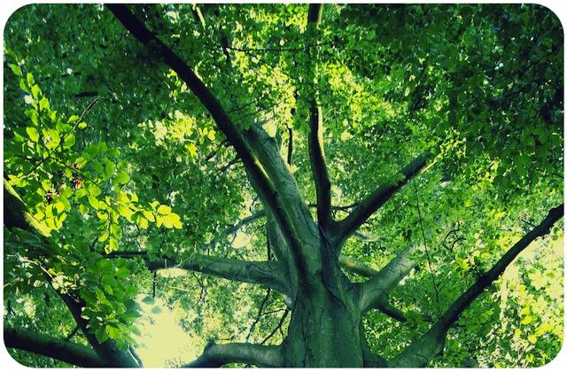 puumetsa