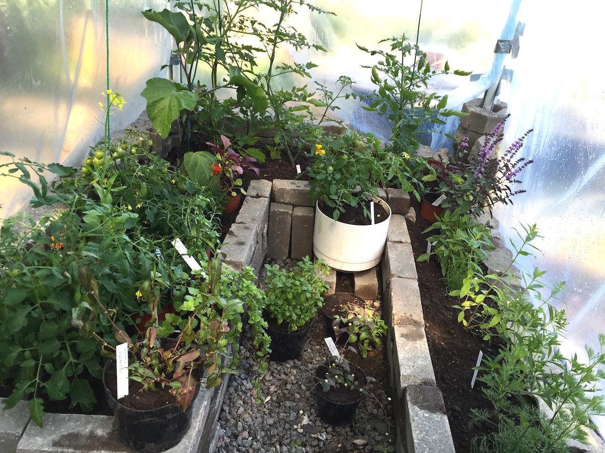 kasvithuoneessa